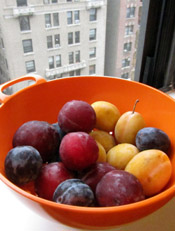 Fresh Red, Yellow and Purple Plums